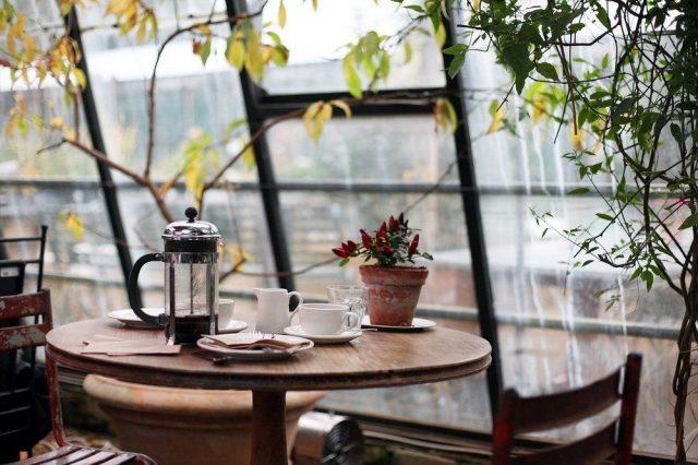 Ihr neuer Wintergarten, die große Fensterfront mit grünem Charme